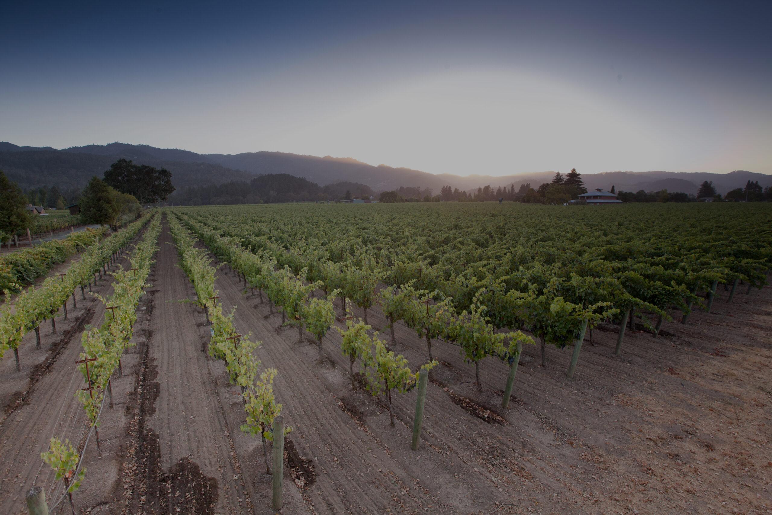 Homepage header photo of vineyards